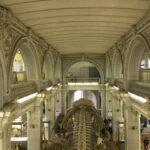 зоологический музей мамонт