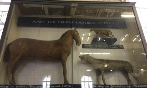 лошадь и собаки Петра Первого